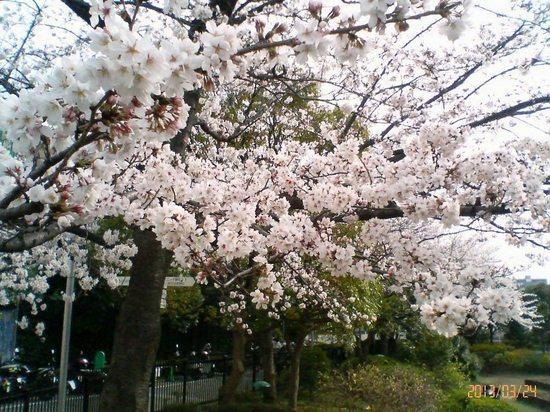#02P001コルトンの桜テニススクール方向.jpg