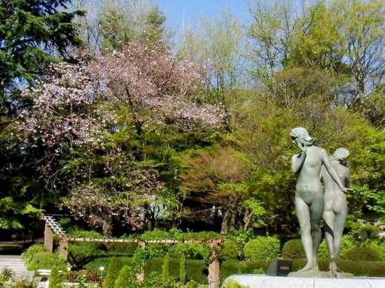 #03G3812里見公園散った桜.jpg