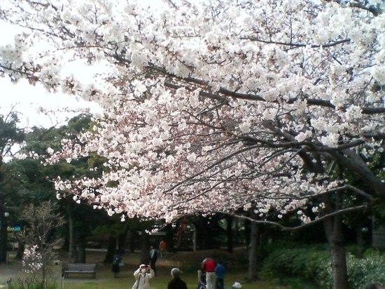 #04P003コルトンの桜お稲荷さん方向ア.jpg