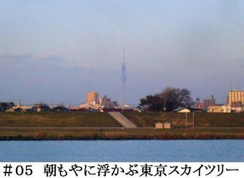 #05国府台から東京スカイツリー.jpg