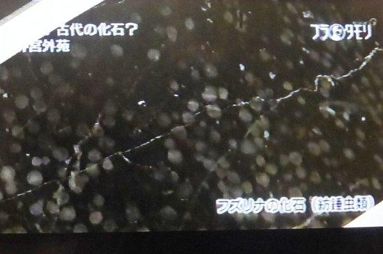 #21ブラタモリトレース絵画館編.jpg