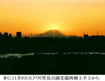 #C11月9日江戸川里見公園北端付近から.jpg