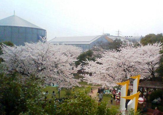 A01P003コルトン桜俯瞰  93.jpg