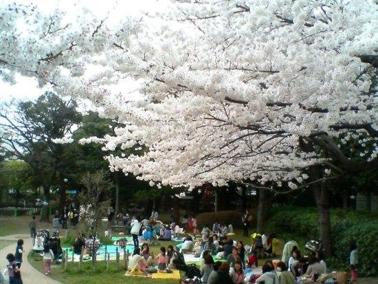 A04P009コルトンの桜(背景稲荷).jpg