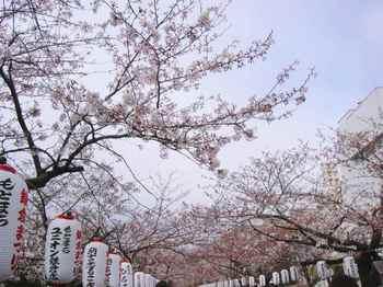 #04鎌倉若宮大路217.jpg