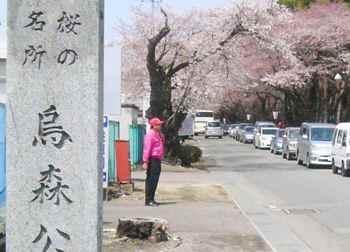 #05烏森公園の桜277.jpg