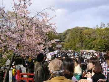 #05鶴岡八幡宮221.jpg