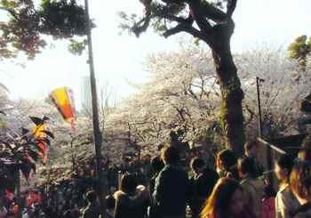 #07上野の桜655.jpg