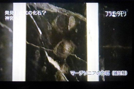 #17ブラタモリトレース絵画館編.jpg