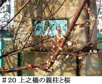 #20上之橋の親柱と桜.jpg