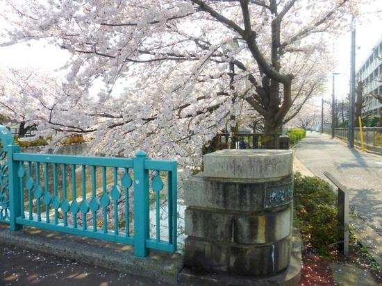 $17青丸⑨滝野川橋より上流方向P327.jpg